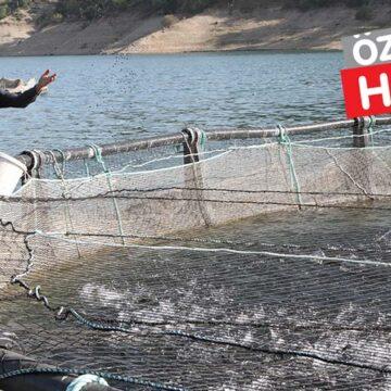 Denizi olmayan kent balık ihracatında rekor kırıyor